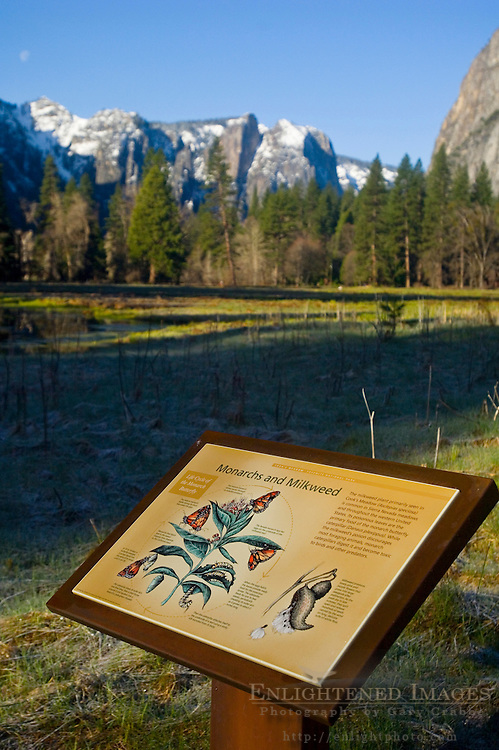 Interpretive education sign and green spring grass in meadow, Yosemite Valley, Yosemite National Park, California
