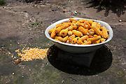 Bowl of corn in the sun