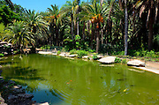 Tropical garden with water pool