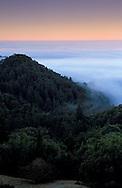 Fog bank at dawn, Santa Cruz Mountains, Santa Cruz County, California