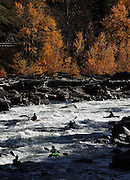 The Wenatchee River boils through the Tumwater Canyon west of Leavenworth. (Mark Harrison / The Seattle Times)