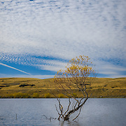 Lake Alexandrina with solitary tree and calm water
