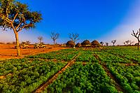 Huts of a farm family in the Thar Desert near Khimsar, Rajasthan, India
