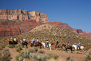 Pack mules on the South Kaibab Trail, Grand Canyon National Park, Arizona.