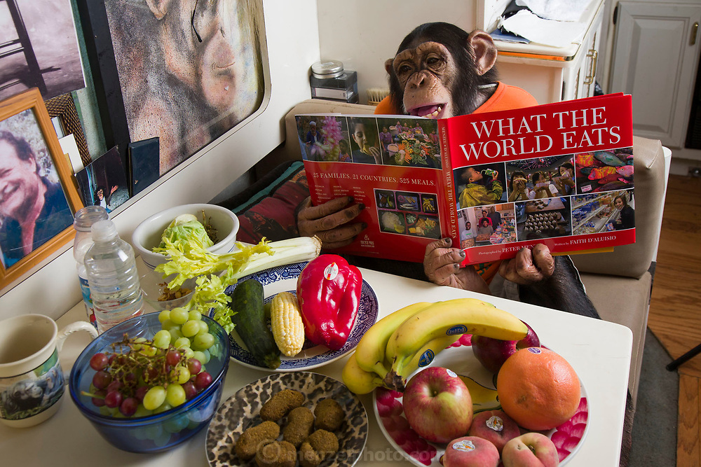 Catskill, NY. Ricki the Chimp looks at What the World Eats during a break in a shooting session on what he himself eats in one day.