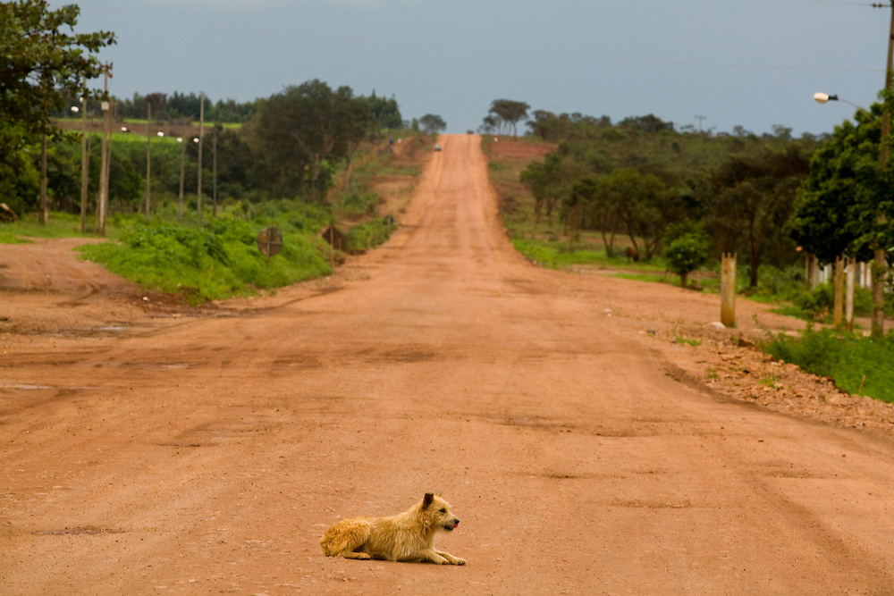 Leme do Prado_MG, Brasil...Cachorro em uma estrada de terra em Leme do Padro, Minas Gerais...A dog on the dirty road in Leme do Padro, Minas Gerais...Foto: LEO DRUMOND / NITRO.