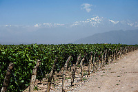 Rows of Malbec grapevines stand in the shadow of the Andes mountain range at Bodega Ruca Malen in the Luján de Cuyo area of Mendoza, Argentina, looks over Malbec vines. The bodega offers a five-course tasting menu with pairing of it's own wines.