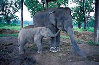 Nepal - Teraï - Parc national de Chitwan - Nurserie des élephants