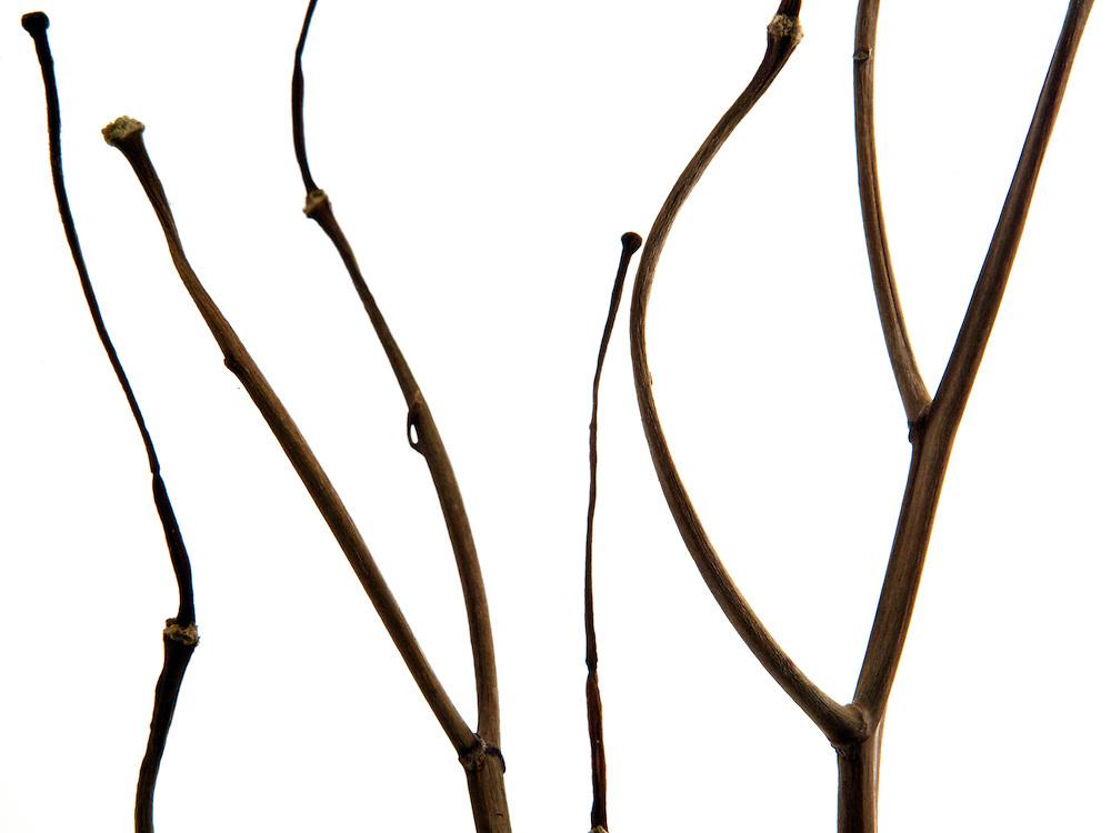 Still Life of a branch