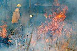 Controlled burn on Wilt's Prairie, a Blackland Prairie remnant near Ennis, Texas, south of Dallas. Texas, USA.