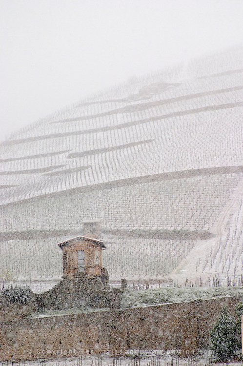 A small tool shed. The Hermitage vineyards on the hill behind the city Tain-l'Hermitage, on the steep sloping hill, stone terraced. Sometimes spelled Ermitage. Vineyards under snow in seasonably exceptional weather in April 2005. Tain l'Hermitage, Drome, Drôme, France, Europe