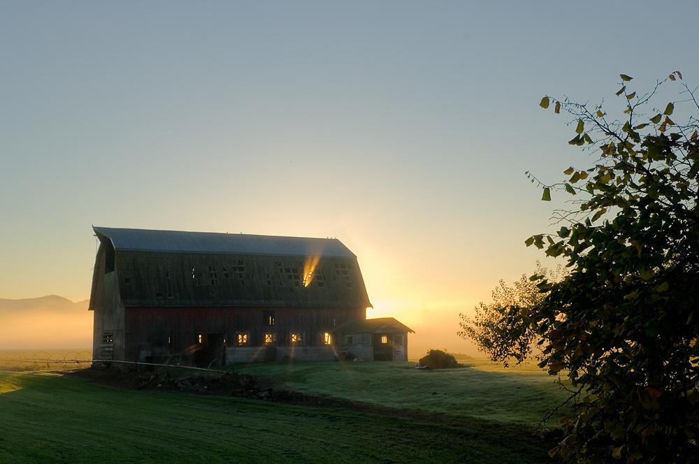 Morning light, barn in the  Skagit Valley, Washington, USA