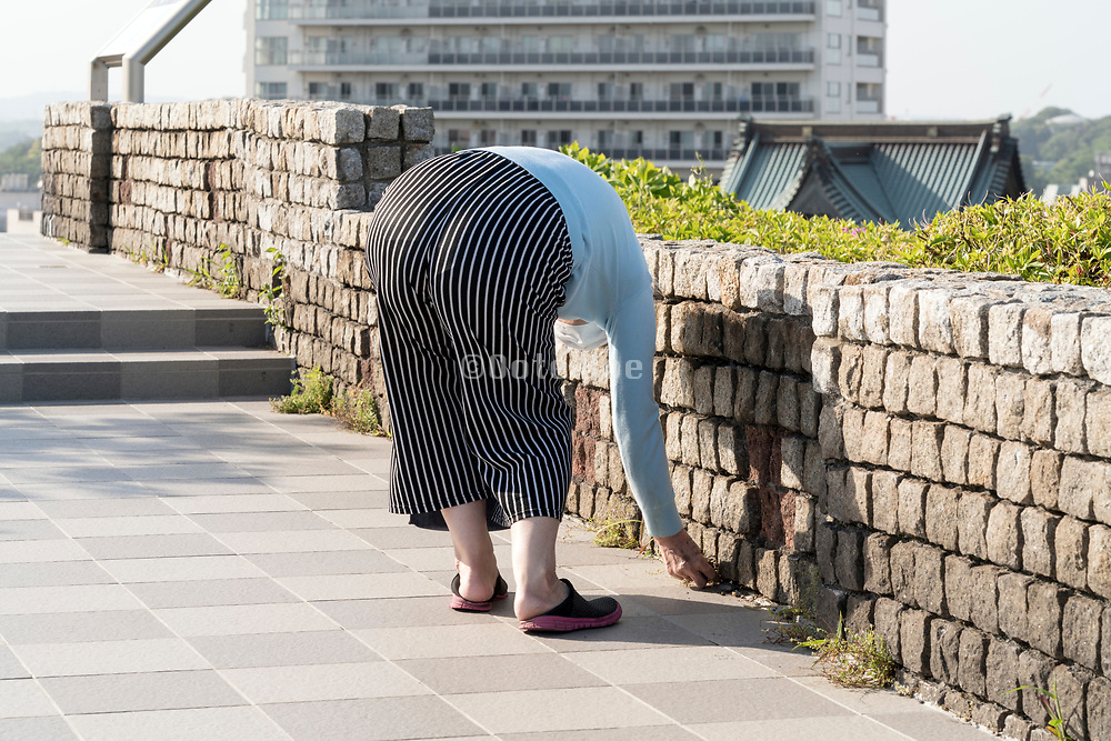 woman picking weeds from wall cracks Japan Yokosuka