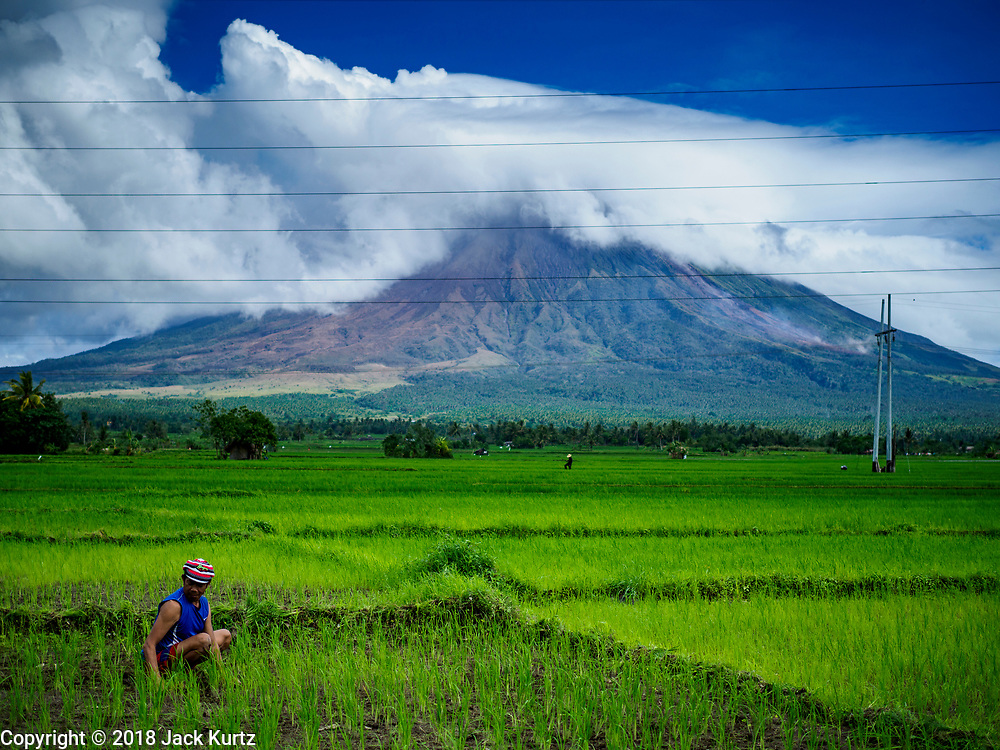 21 JANUARY 2018 - CAMALIG, ALBAY, PHILIPPINES: A man plants baby rice in his field near the Mayon volcano, smoking in the background. Mayon volcano, the most active volcano in the Philippines.  More than 30,000 people have been evacuated from communities on the near the Mayon volcano in Albay province in the Philippines. Most of the evacuees are staying at schools in communities outside of the evacuation zone.   PHOTO BY JACK KURTZ