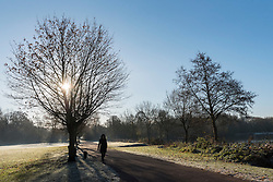 © Licensed to London News Pictures. 29/11/2016. London, UK. A chilly start to the day at Rickmansworth Aquadrome in north-west London, as sub-zero overnight temperatures produced a thick layer of morning frost.  Temperatures are expected to be even colder tonight. Photo credit : Stephen Chung/LNP