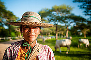 Myanmar, Bagan. Shepherd comes back with her herd  and makes stops on a dusty road of Bagan late in the afternoon.
