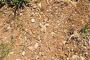 Domaine d'Aupilhac. Montpeyroux. Languedoc. Terroir soil. France. Europe. Vineyard. Sand.