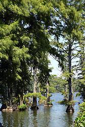 July 2007:  Horseshoe Lake Conservation area,