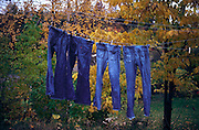 Jeans hanging to dry, Blakstad, Norway..Media Usage:.Subject photograph(s) are copyrighted Edward McCain. All rights are reserved except those specifically granted by McCain Photography in writing...McCain Photography.211 S 4th Avenue.Tucson, AZ 85701-2103.(520) 623-1998.mobile: (520) 990-0999.fax: (520) 623-1190.http://www.mccainphoto.com.edward@mccainphoto.com