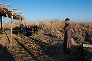 Many buffalo farmers are leaving the Marshlands for economic reasons and heading for the already poverty stricken over crowded cities