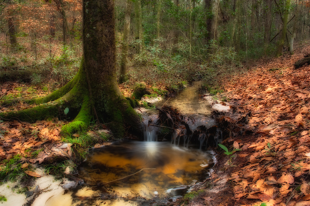 A beautiful little creek winding through the ravines of the Lake Talquin State Forest in North Florida.