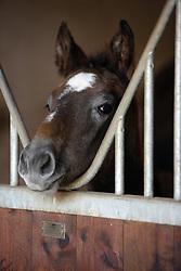 Elevage de Preuilly<br /> Egligny 2008<br /> Photo © Hippo Foto