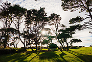 Backlit evergreen trees atop the headland at Devils Punchbowl State Natural Area, Otter Rock city, Oregon coast, USA.