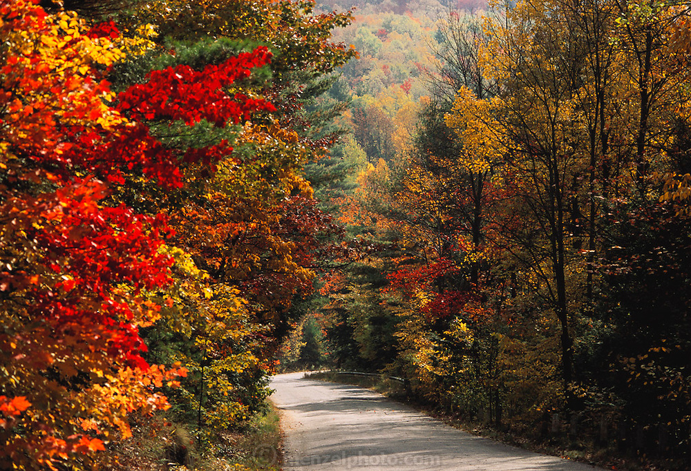 Fall in the Berkshire Mountains, Western Massachusetts.  New England, USA.