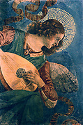 Angel Musician', angel playing a lute.  Melozzo da Forli (1438-1494) Umbrian, Italian painter.