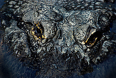 Reptiles (under reconstruction, pls search)