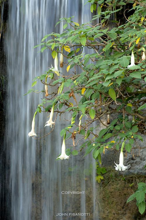 Flowers Against the Waterfall, Los Angeles County Arboretum