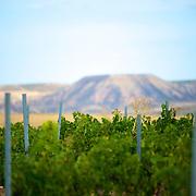 A l'entre?e nord des Bardenas: le vignoble d'El Desierto. Ce vin biologique au charisme de velours re?veille? par les tempe?ratures contraste?es du plus grand de?sert d'Europe est un vin haute couture savamment vinifie? par les 3 oenologues de talents.///With the northern entry of Bardenas: the vineyard of El Desierto. This biological wine with the velvet charisma awaked by the contrasted temperatures of the largest desert of Europe is a wine haute couture learnedly vinified by the 3 oenologists of talents...