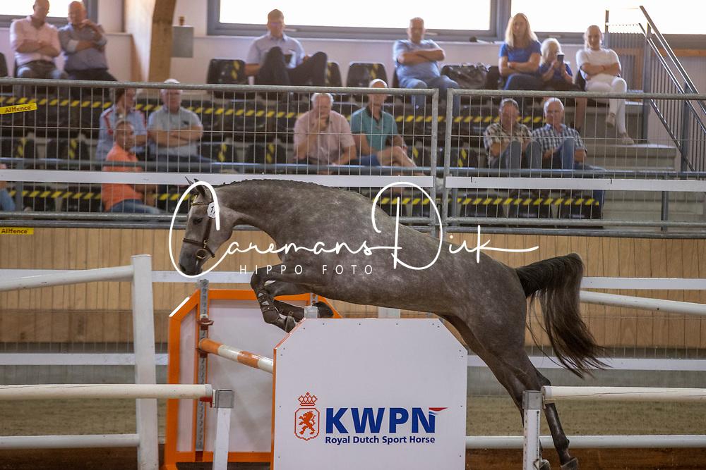 017, Marbella<br /> Nationaal Kampioenschap KWPN<br /> 3 jarige springmerries<br /> © Hippo Foto - Dirk Caremans<br />  15/08/2020