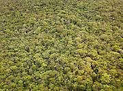 The dense jungle foliage of Canaima National Park, seen from the air, in Venezuela