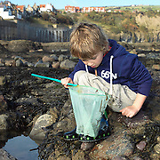 A young boy looks in his fishing net after rockpooling, Robin Hood's Bay, North Yorkshire, UK