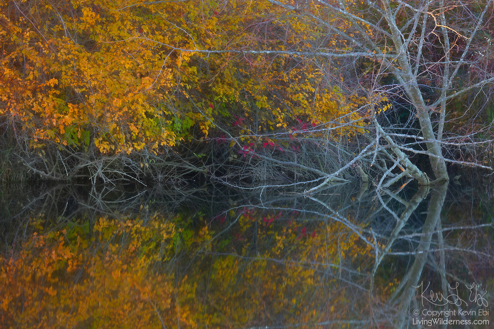 A mixture of bare branches and autumn leaves are reflected on the still waters of Ebey Slough in Snohomish County, Washington.