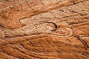 Swirling sandstone pattern along the trail to Zebra Slot Canyon, Grand Staircase-Escalante National Monument, Utah, USA. From Hole-in-the-Rock Road, hike east on a well-trodden but unmarked path, 5 miles round trip with 450 feet total gain to Zebra Slot.