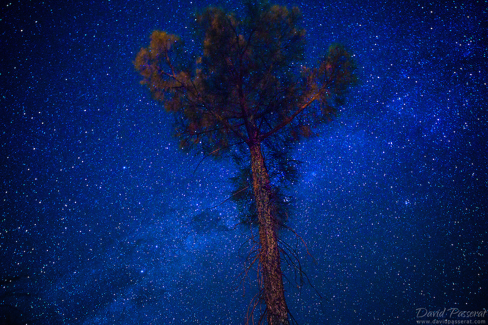The Milky Way over a lonely tree in the desert.