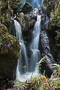 Water falls in a cloud forest in the high altitude landscape above the Black Sheep Inn, near Chugchilan, along the Lago Quilotoa driving loop, Ecuador, the Andes, South America.