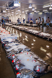 monchong or sickle pomfret, Taractichthys steindachneri, and other locally caught fish on pallets on the auction floor, found in deep water greater than 900 feet and could weigh over 25 pounds, Honolulu Fish Auction by United Fishing Agency, the only fresh tuna auction in the US, up to 160,000 pounds of fish can be auctioned in a day, Pier 38, Commercial Fishing Village, Honolulu, Oahu, Hawaii, USA