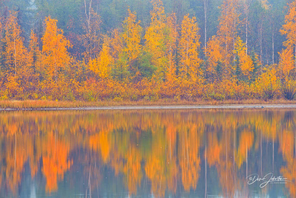 Autumn aspens reflected in foggy Range Lake, Yellowknife, Northwest Territories, Canada