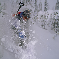The Big Mountain Ski Area, Whitefish, Montana.A skier turns in powder snow between snowy trees called snow ghosts.