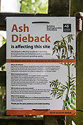 A notice indicates the presence of ash dieback at Calvert Jubilee Nature Reserve on 27 July 2020 in Calvert, United Kingdom. Ash dieback is a fungal disease spread by the wind which is expected to kill the majority of ash trees in the UK.