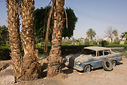 "An abandoned Mercedes W110 car under a palm tree in the village of Bairat on the West Bank of Luxor, Nile Valley, Egypt. At the foot of these giant trees on the roadside the vehicle rests as a relic of a bygone age of motoring. The W110 was Mercedes-Benz's entry level line of midsize automobiles in the mid-1960s. One of Mercedes' ""Fintail"" (German: Heckflosse) series, the W110 initially was available with either a 1.9 L M121 gasoline or diesel inline-four. ("