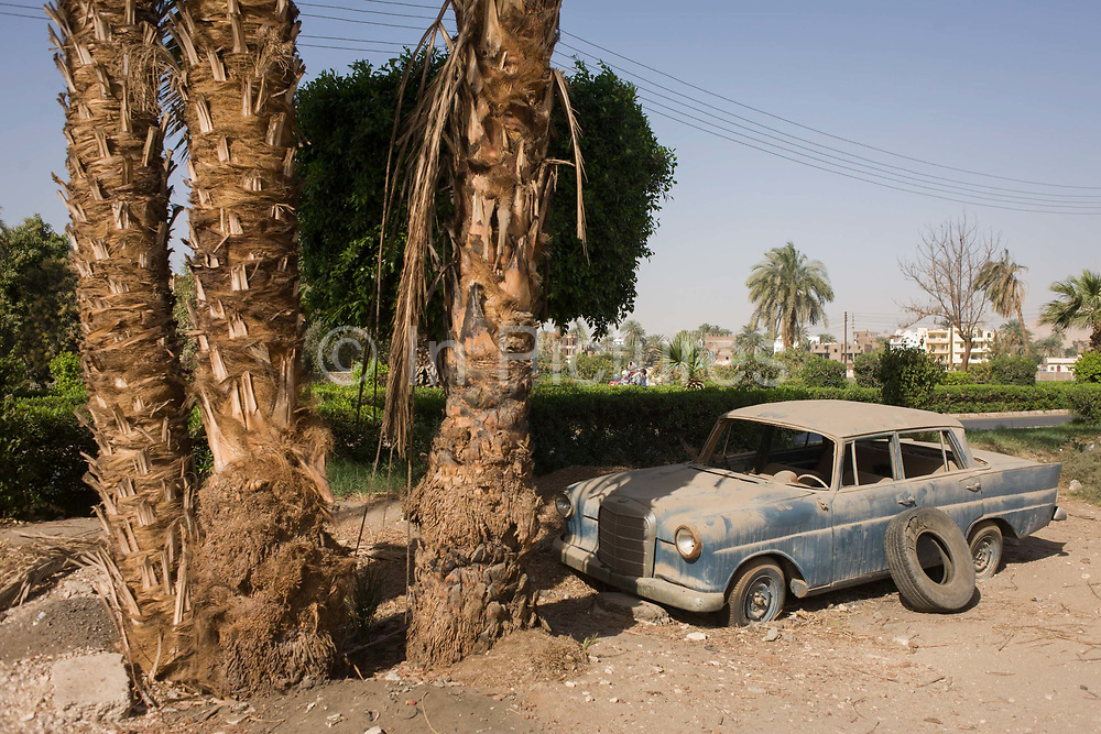 """An abandoned Mercedes W110 car under a palm tree in the village of Bairat on the West Bank of Luxor, Nile Valley, Egypt. At the foot of these giant trees on the roadside the vehicle rests as a relic of a bygone age of motoring. The W110 was Mercedes-Benz's entry level line of midsize automobiles in the mid-1960s. One of Mercedes' """"Fintail"""" (German: Heckflosse) series, the W110 initially was available with either a 1.9 L M121 gasoline or diesel inline-four. ("""