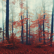 Deciduous trees with fall foliage on a foggy November morning