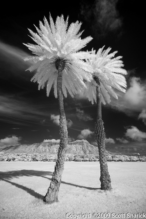 Two tall palm trees and Diamond Head in infrared.