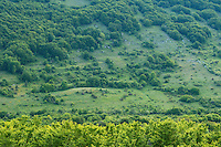 Grazing land abandonment, now turning into wildlife watching area. The Central Apennines rewilding area, Italy, in and around the Abruzzo, Lazio e Molise National Park.