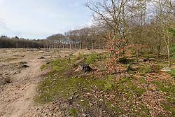 Spanderswoud, GNR, Hilversum Noord Holland, Netherlands