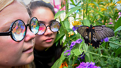 "© Licensed to London News Pictures. 05/09/2019. LONDON, UK. Whitney and Lena, college students from Colorado, wearing kaleidoscopic glasses view a butterfly at a ""Butterfly Biosphere"" in Grosvenor Square, Mayfair.  Setup by Bompas and Parr in association with King's College London and Butterfly Conservation, the aim is to make visitors more aware of the importance of pollinators and the ecosytem that the capital's 50 species of butterfly need to thrive.  The biosphere is open 5 to 15 September.  (Permission to photograph obtained) Photo credit: Stephen Chung/LNP"